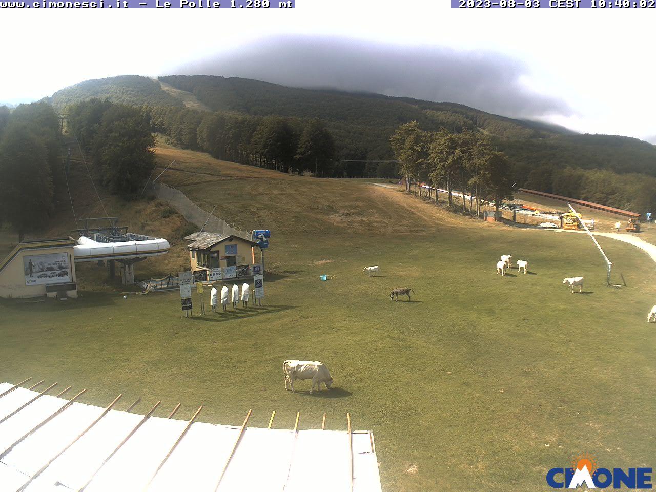 Webcam Cimone (Le Polle) - 1280 m. slm